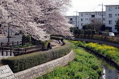 2013年の桜の様子
