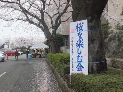 桜を楽しむ会-1