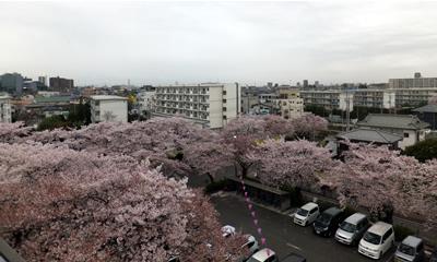 桜を楽しむ会201504-2
