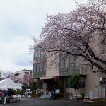 平成29年度桜を楽しむ会